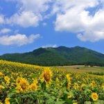 岡山で評判のおすすめカウンセリングルーム4選